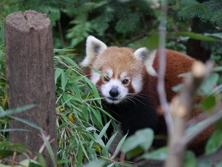 Zoo d'Amneville parc zoologique le plus beau d'europe à l'Hôtel Marso Amnéville